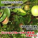 【ふるさと納税】0066.パッションフルーツの1年生苗 5本セット