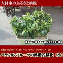 【ふるさと納税】0188.パッションフルーツの移動式緑化(小...