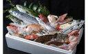【ふるさと納税】B-043 対馬の味便り「唐崎岬網元でとれた新鮮活き〆高価島魚3kgセット」