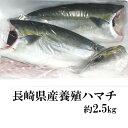 長崎県産養殖ハマチ(フィーレ)