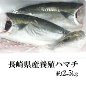 【ふるさと納税】長崎県産養殖ハマチ(フィーレ)