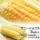 【ふるさと納税】スイートコーン13本 新鮮そのまま 収穫当日...