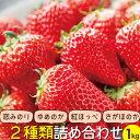 【ふるさと納税】長崎県産 旬のいちご 1kg 苺ファンへ贈る...