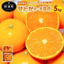 【ふるさと納税】 長崎県産 せとか みかん 約5kg 蜜柑 ...