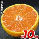 【ふるさと納税】熊本県産 大粒熊本みかんたっぷり10kg(3...