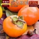 【ふるさと納税】熊本県産 太秋柿 3〜3.5kg 9〜10玉...