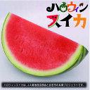 【ふるさと納税】ハロウィンスイカ1玉入(品種:ひときわ 1玉...