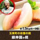 ★期間限定★ジューシーな果汁が溢れ出す♪『緑伸園』の桃★約1...