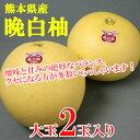 【ふるさと納税】熊本県産 晩白柚(2玉)