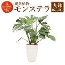 【ふるさと納税】モンステラ 観葉植物 丸鉢(幅16cm×高さ...