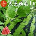 【ふるさと納税】 大玉 西瓜 1玉(8〜10kg) すいか ...