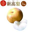 【ふるさと納税】新高梨 5kg にいたか なし 果物 くだもの フルーツ 果実 九州産 国産 熊本県産 送料無料 冷蔵