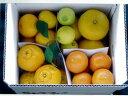 ショッピングカンフル 【ふるさと納税】【ふるさと納税】5種の柑橘詰め合わせセット(5kg箱入り) 熊本県産