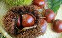 【ふるさと納税】錦の栗 【果物類・くり・栗】 お届け:10月...