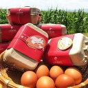 【ふるさと納税】熊本県産 土肥養鶏場の赤卵「霧のたまご」48個(6個入り×8パック)M〜Lサイズ 《定期便》