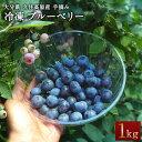 【ふるさと納税】冷凍 ブルーベリー 1kg 無農薬 手摘み ...