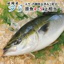 【ふるさと納税】ブリ 1尾 約4kg〜5kg 刺身 焼き魚 ...