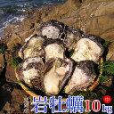 【ふるさと納税】延岡産天然岩牡蠣(生食用)10kg(中)(2020年4月から発送開始)