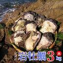 【ふるさと納税】延岡産天然岩牡蠣(生食用)3kg(大)(20...