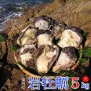 【ふるさと納税】延岡産天然岩牡蠣(生食用)5kg(大)(20...