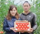 【ふるさと納税】こだわりの高糖度トマト(厳選)
