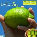 【ふるさと納税】<エコファーマーが作ったレモン5kg(ご家庭...