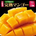 【ふるさと納税】「南国宮崎からお届け」児玉農園 完熟マンゴー3Lサイズ2個