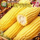 【ふるさと納税】宮崎県産<南国育ち ゴールドラッシュ20本入...