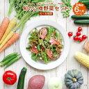 【ふるさと納税】野菜ソムリエが選ぶ 旬のこゆ野菜セット 6ヵ...
