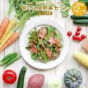 【ふるさと納税】野菜ソムリエが選ぶ 旬のこゆ野菜セット 12...