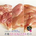 【ふるさと納税】若鶏もも ささみ むね 9.5kg 粉スパイ...