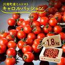 【ふるさと納税】「キャロルパッション」1.8kgを栽培農家から直送!しっかり選別してお届けします。川南町産ミニトマト