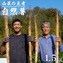 【ふるさと納税】Y-1 山菜の王者 自然薯1.5kg