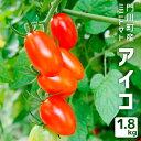【ふるさと納税】AK-1 門川町産ミニトマト アイコ1.8k...