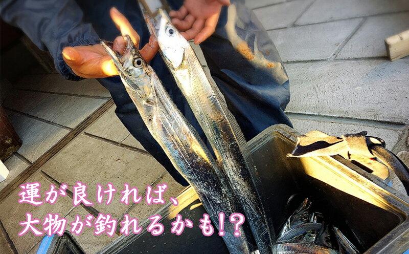 【ふるさと納税】錦江湾で船釣り!海の幸満喫日帰...の紹介画像3