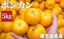 【ふるさと納税】鹿児島県産ポンカン5kg[季節限定]