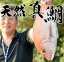 【ふるさと納税】日置の特選鮮魚(天然真鯛) 【江口漁業協同組合】