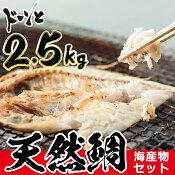 【ふるさと納税】海産物セット 鯛【吹上町漁協】
