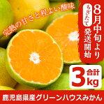 《先行予約受付中!2020年8月15日〜10月14日の間に発送予定》期間限定!鹿児島県産のグリーンハウスみかん(計3kg)もぎたてミカン!新鮮な果物をお届け♪