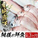【ふるさと納税】旬の朝獲れ鮮魚コース 3ヵ月定期便!その日獲...