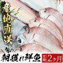 【ふるさと納税】旬の朝獲れ鮮魚コース 2ヵ月定期便!その日獲...