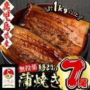 【ふるさと納税】日本初!無投薬で育った鰻師の蒲焼<大サイズ7尾> 計1kg以上!真空パックでうなぎの