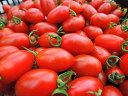 【ふるさと納税】亜熱帯トマト「野生の証明」