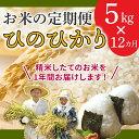 【ふるさと納税】【お米の定期便】鹿児島県産ひのひかり5kg×...