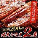 【ふるさと納税】鹿児島県産 特大うなぎ200g×2尾【財宝】