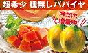 【ふるさと納税】今だけ増量!国産フルーツパパイヤ(4.5kg:6〜8玉)【財宝】