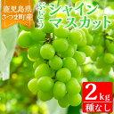 【ふるさと納税】<ご予約受付中!2020年8月~10月の間に発送予定>鹿児島県さつま町産のぶどう♪シャインマスカット(2kg)皮ごと食べれる!ジューシーで上品な甘みのブドウ【大蔵果樹園】