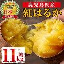 【ふるさと納税】《期間限定》鹿児島県産紅はるか生芋(11kg)甘くて美味しいお芋、さつまいもをお届け!【弐番屋】