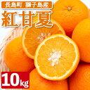 【ふるさと納税】BLUE獅子島柑橘組合の紅甘夏_blue-4111