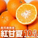 【ふるさと納税】紅甘夏10kg_ja-644